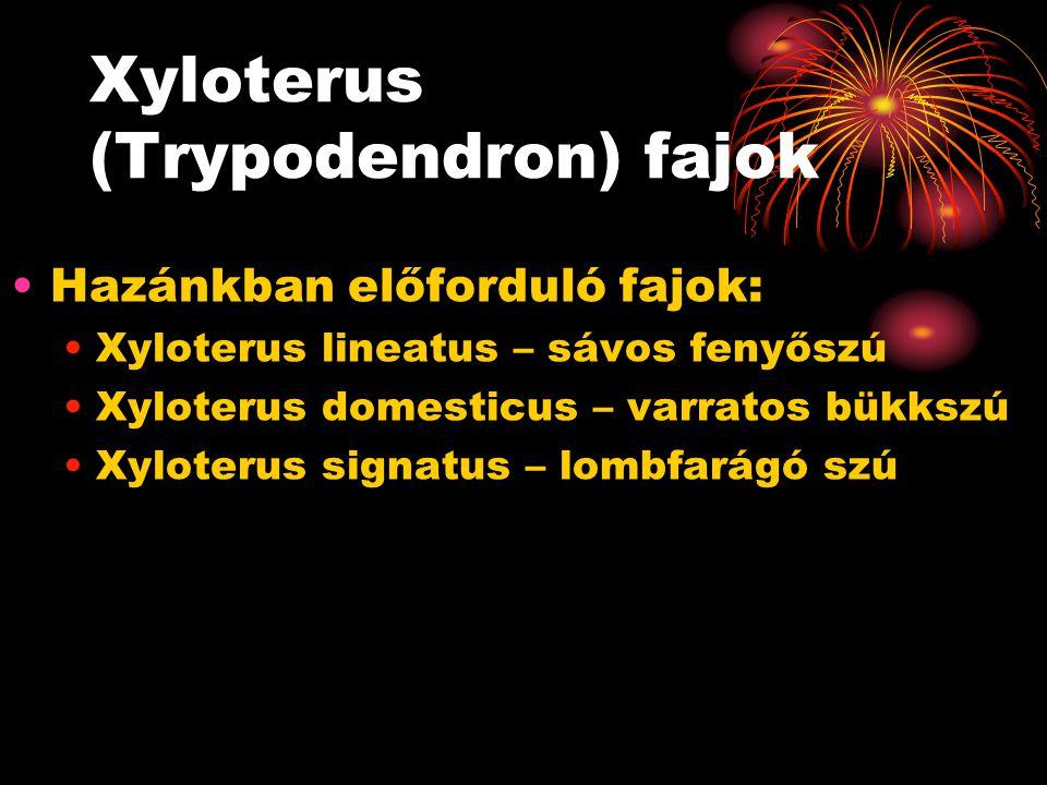 Xyloterus (Trypodendron) fajok