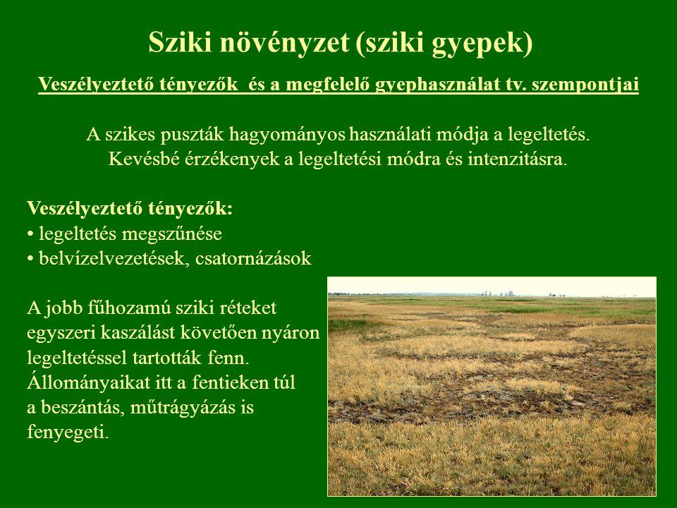 Sziki növényzet (sziki gyepek)