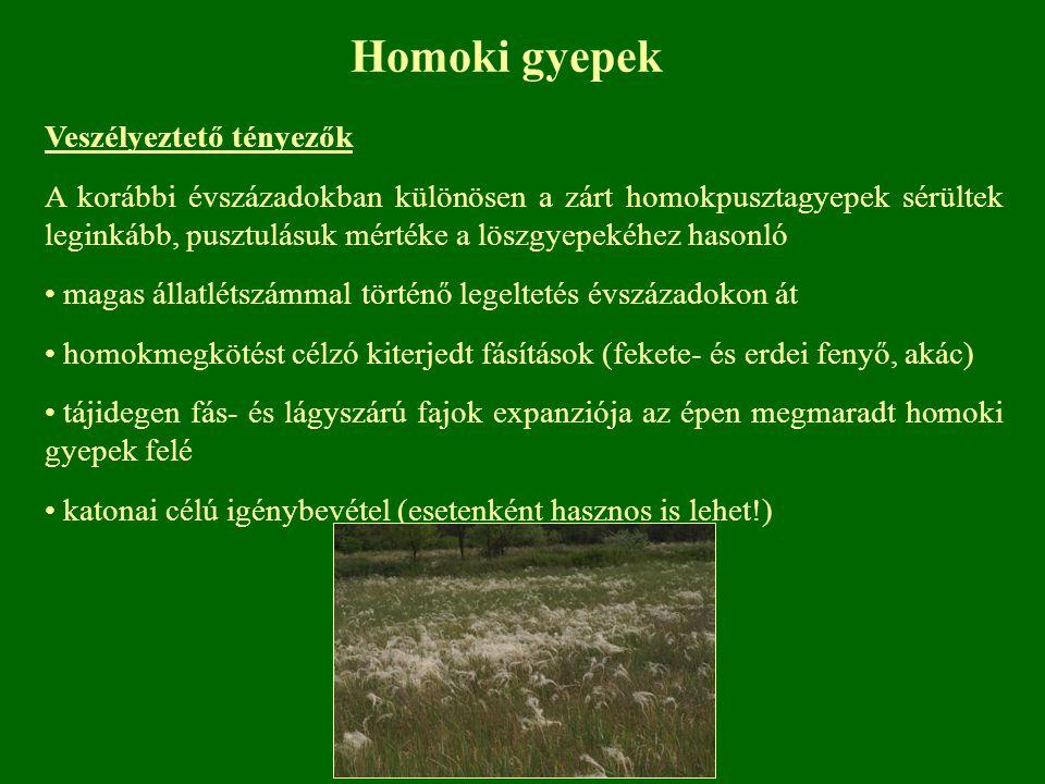 Homoki gyepek Veszélyeztető tényezők