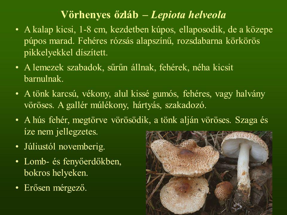 Vörhenyes őzláb – Lepiota helveola