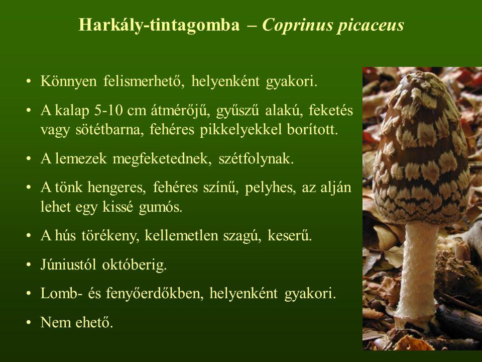 Harkály-tintagomba – Coprinus picaceus
