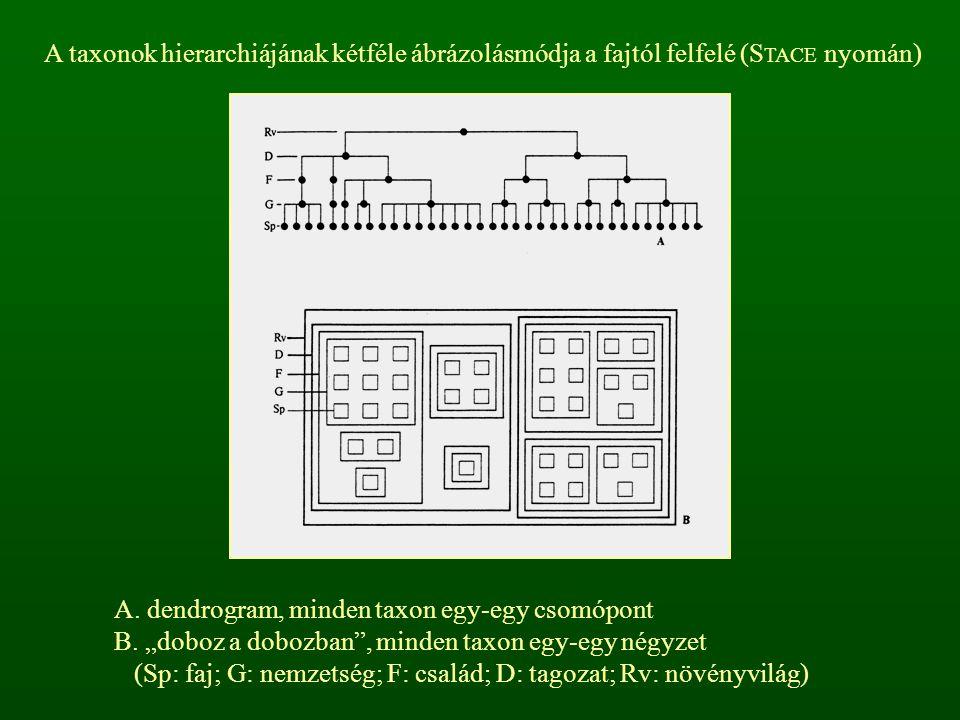 A taxonok hierarchiájának kétféle ábrázolásmódja a fajtól felfelé (STACE nyomán)