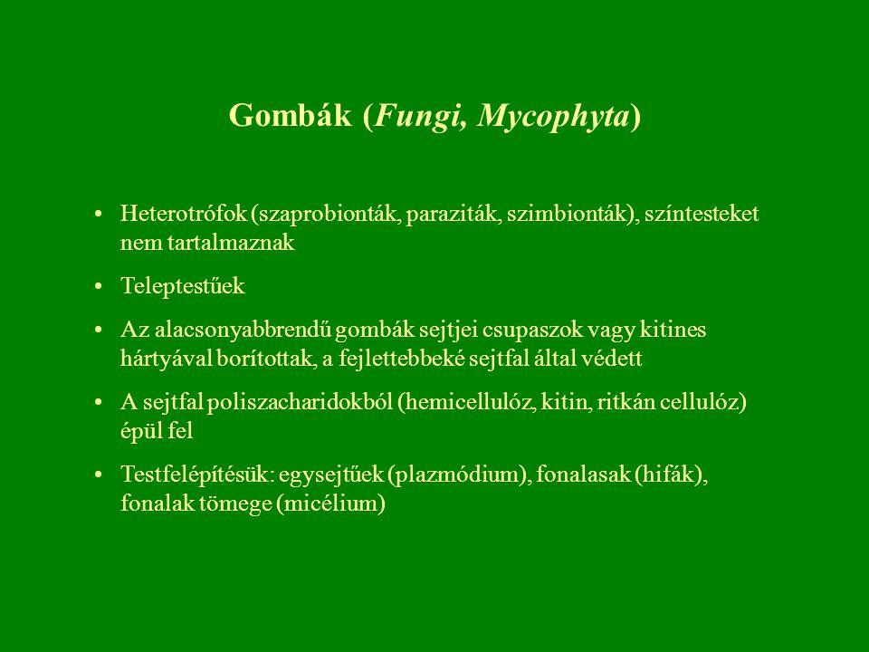 Gombák (Fungi, Mycophyta)