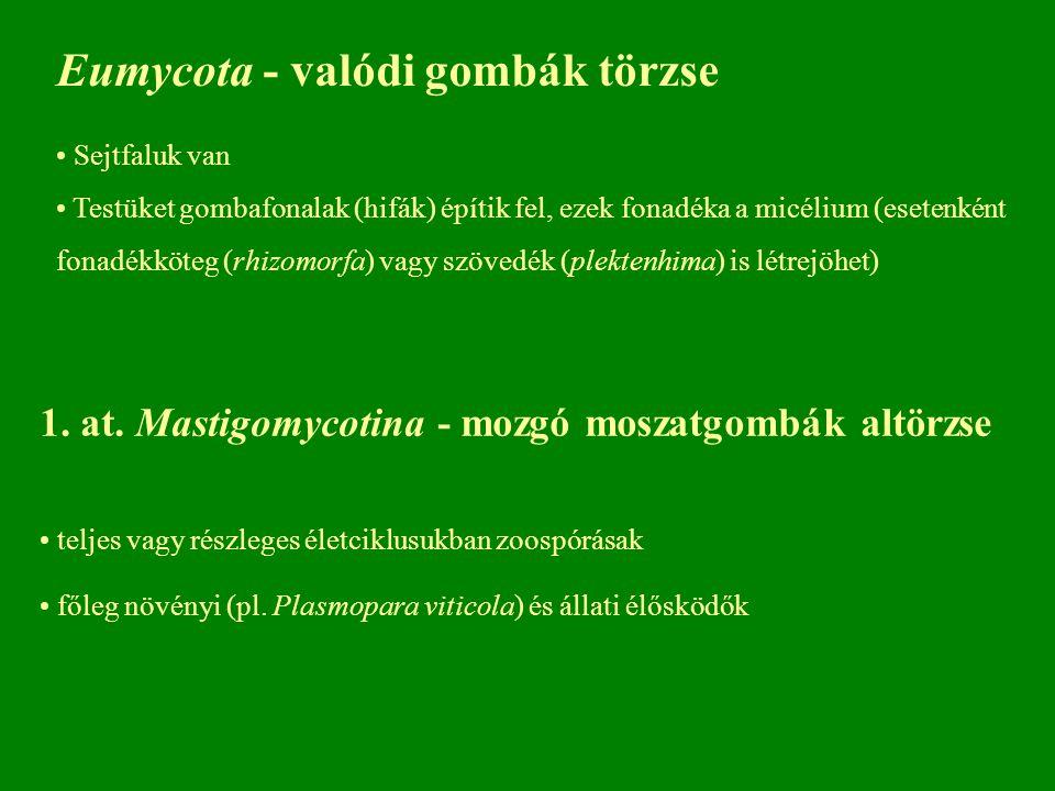 Eumycota - valódi gombák törzse