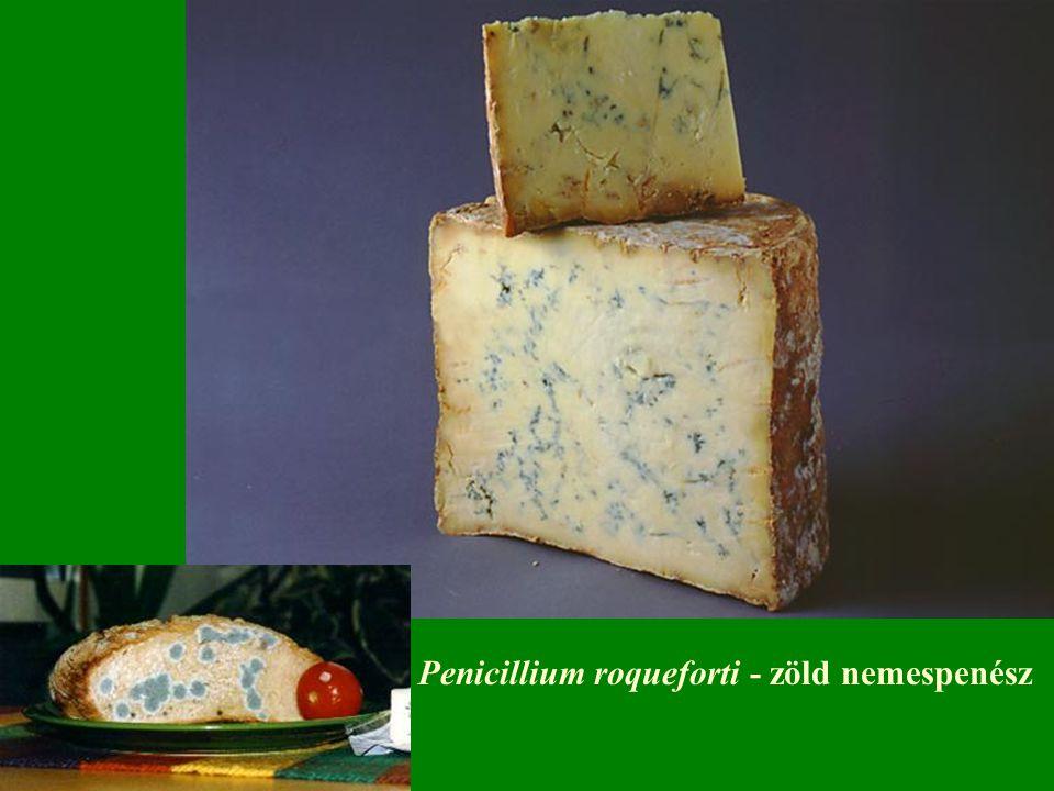 Penicillium roqueforti - zöld nemespenész
