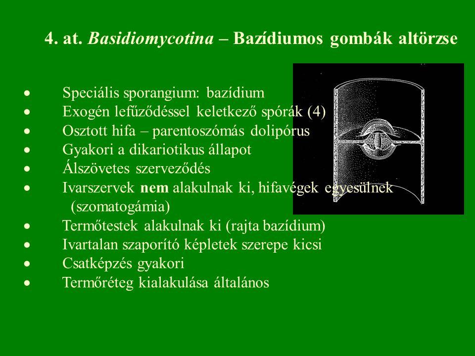 4. at. Basidiomycotina – Bazídiumos gombák altörzse