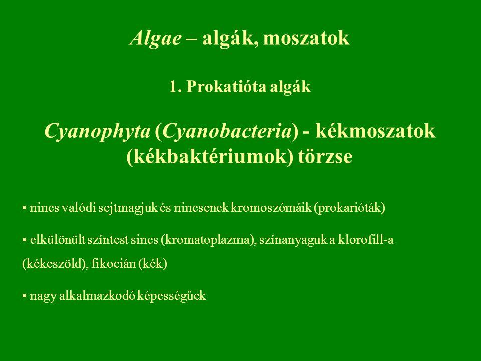 Cyanophyta (Cyanobacteria) - kékmoszatok (kékbaktériumok) törzse