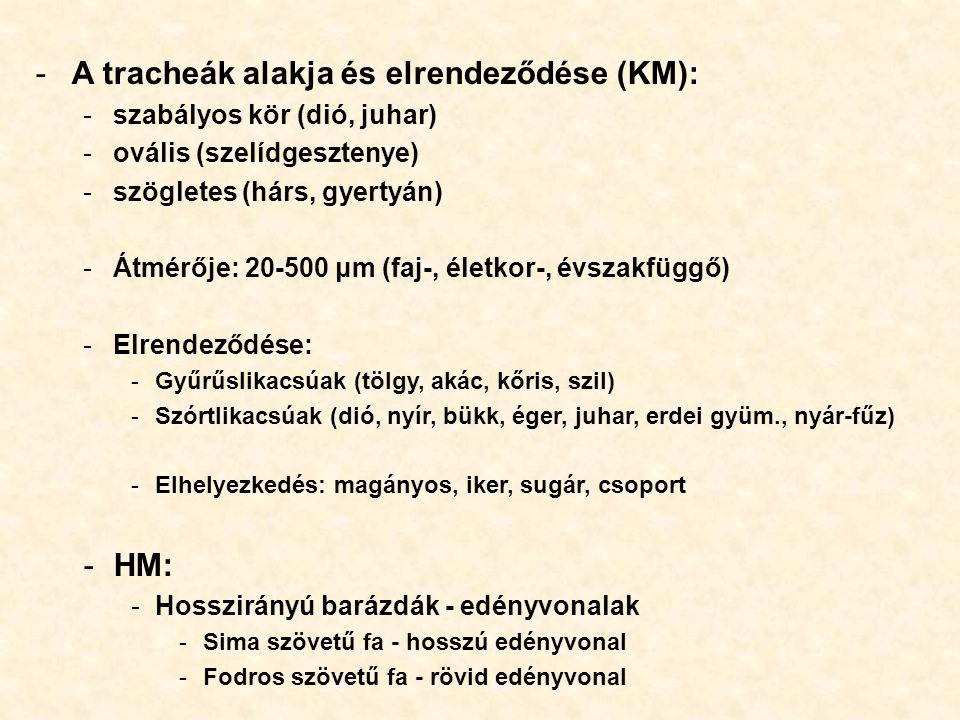 A tracheák alakja és elrendeződése (KM):