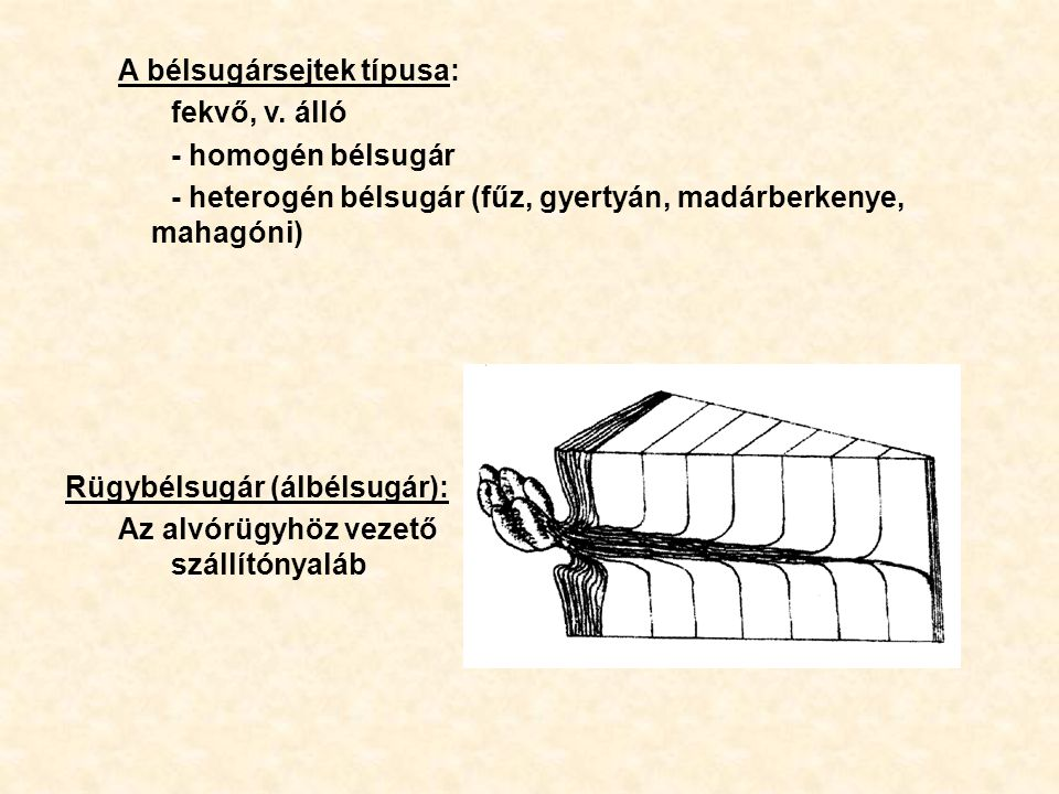 A bélsugársejtek típusa: