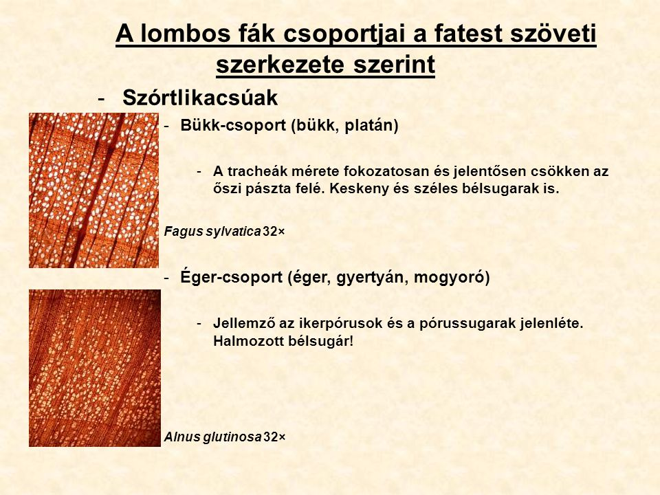A lombos fák csoportjai a fatest szöveti szerkezete szerint
