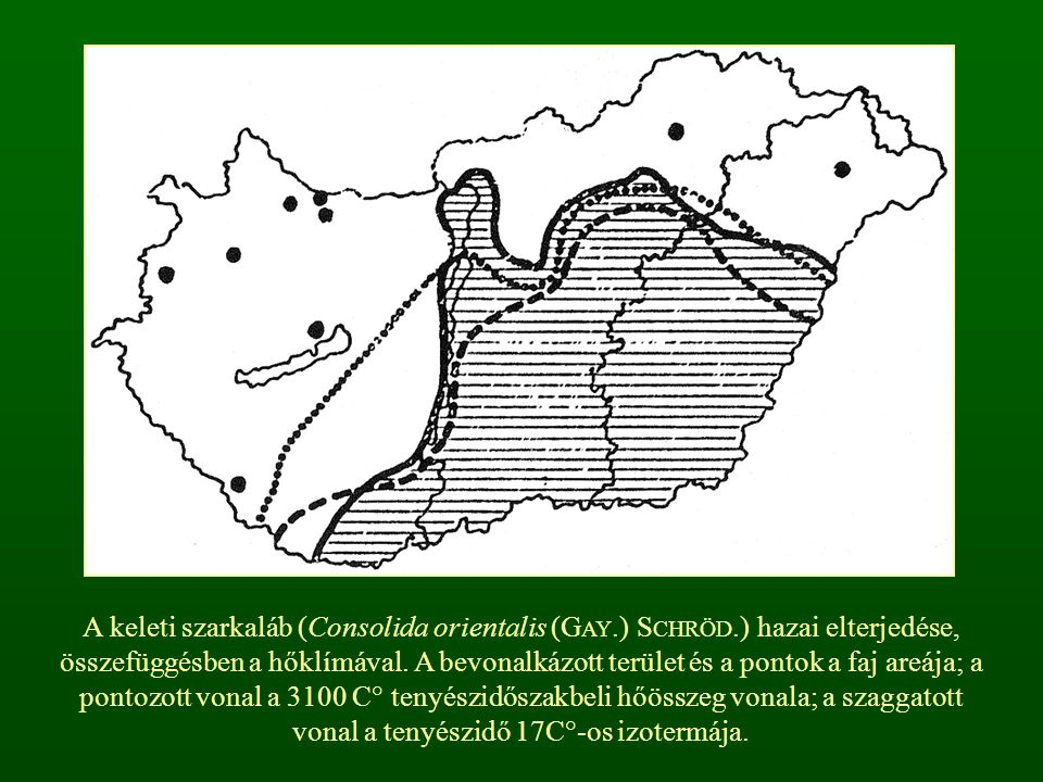 A keleti szarkaláb (Consolida orientalis (GAY. ) SCHRÖD