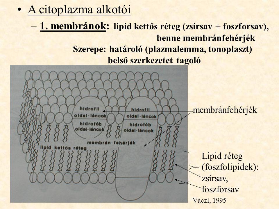 A citoplazma alkotói