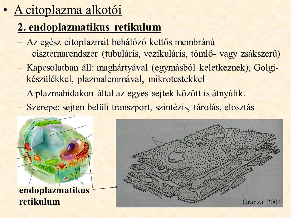 A citoplazma alkotói 2. endoplazmatikus retikulum