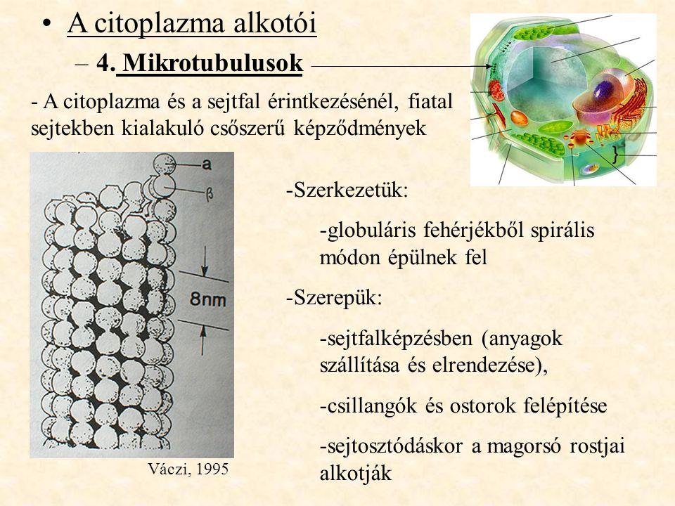 A citoplazma alkotói 4. Mikrotubulusok