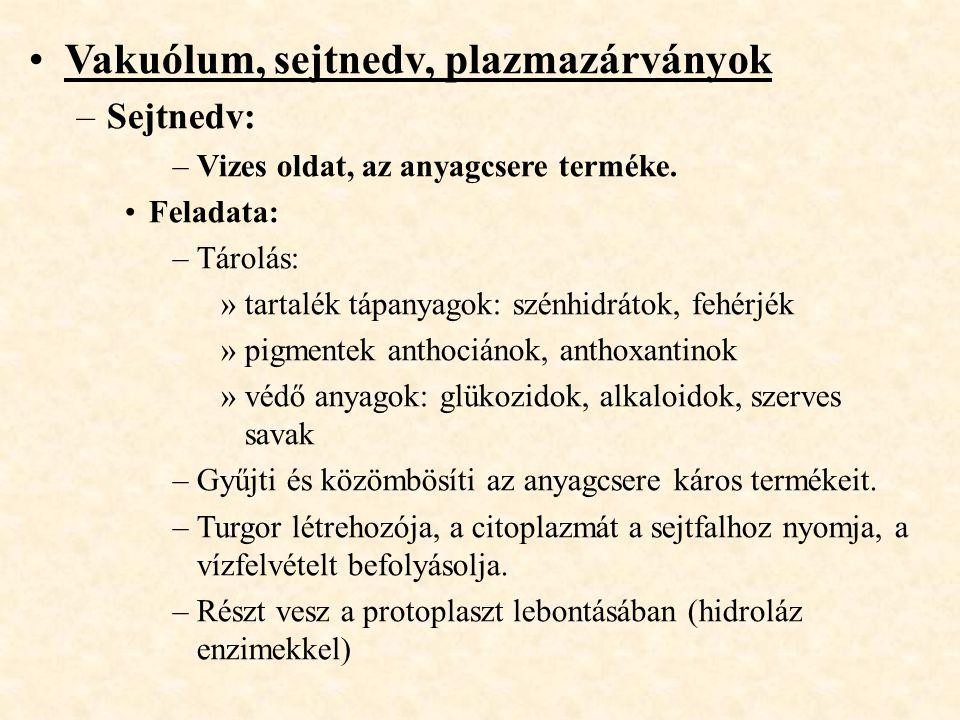 Vakuólum, sejtnedv, plazmazárványok