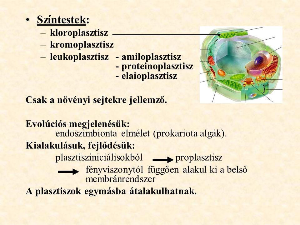 Színtestek: kloroplasztisz kromoplasztisz