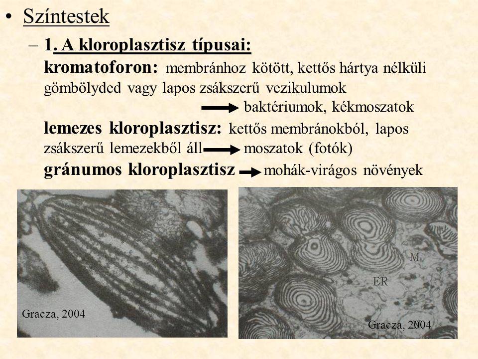 Színtestek 1. A kloroplasztisz típusai: