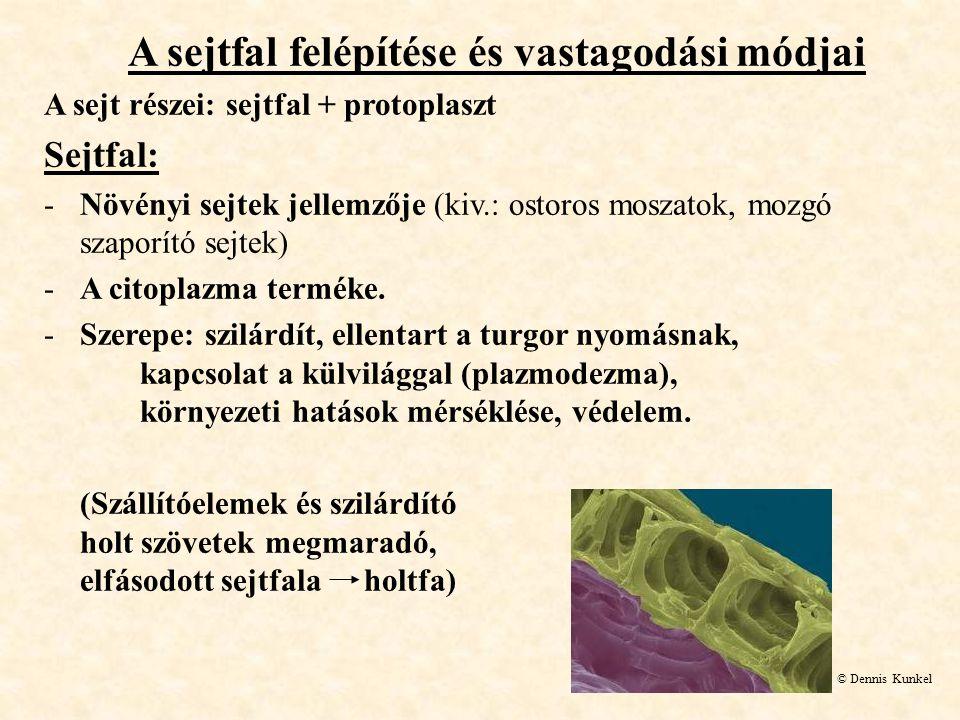 A sejtfal felépítése és vastagodási módjai