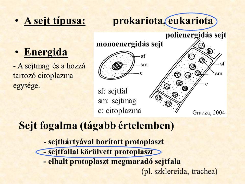 A sejt típusa: prokariota, eukariota Energida