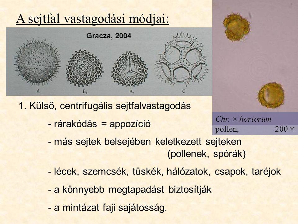 A sejtfal vastagodási módjai:
