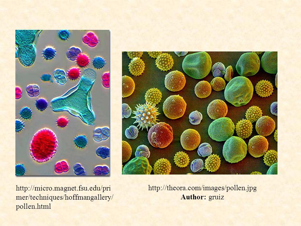 http://micro. magnet. fsu. edu/primer/techniques/hoffmangallery/pollen