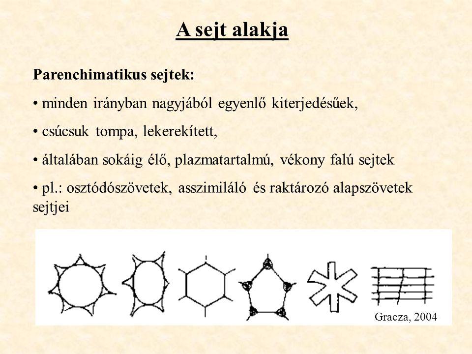 A sejt alakja Parenchimatikus sejtek: