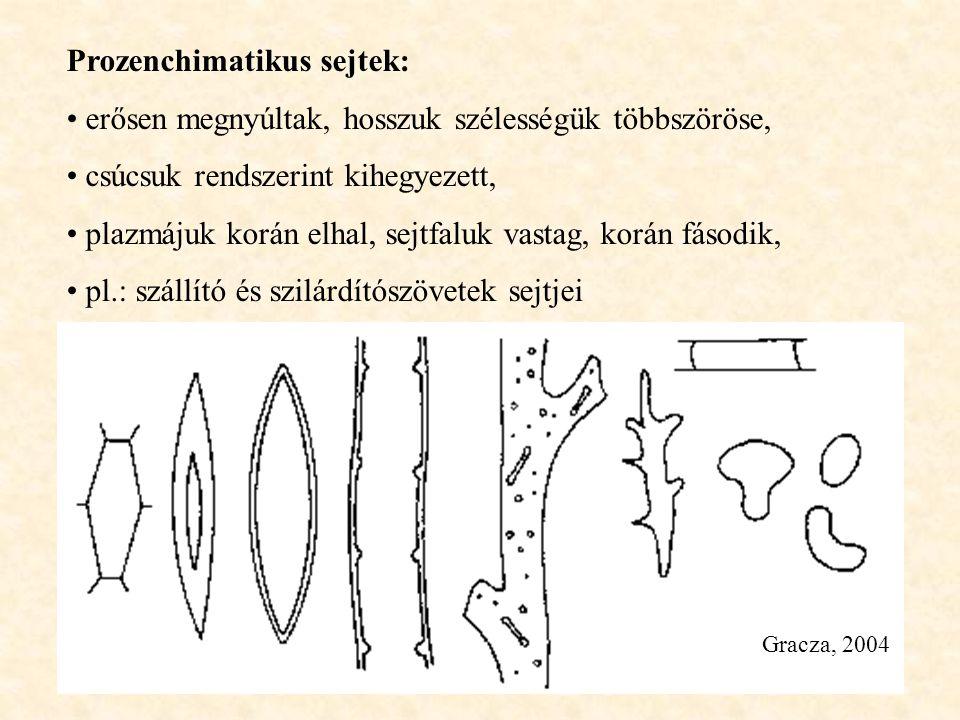 Prozenchimatikus sejtek: