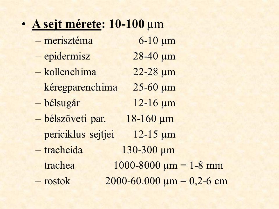 A sejt mérete: 10-100 µm merisztéma 6-10 µm epidermisz 28-40 µm