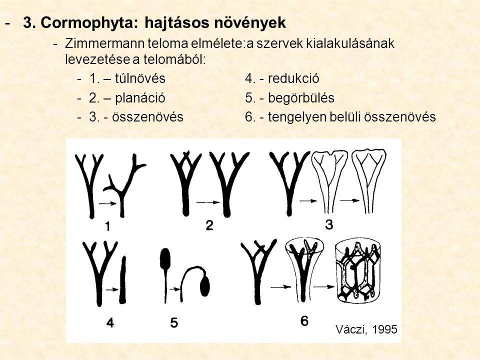 3. Cormophyta: hajtásos növények