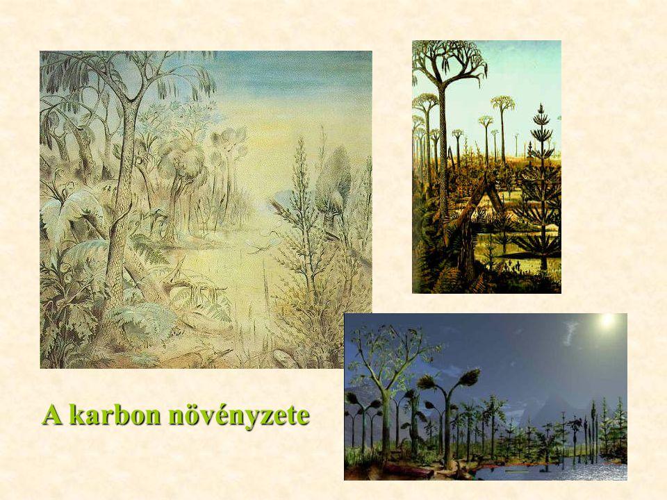A karbon növényzete