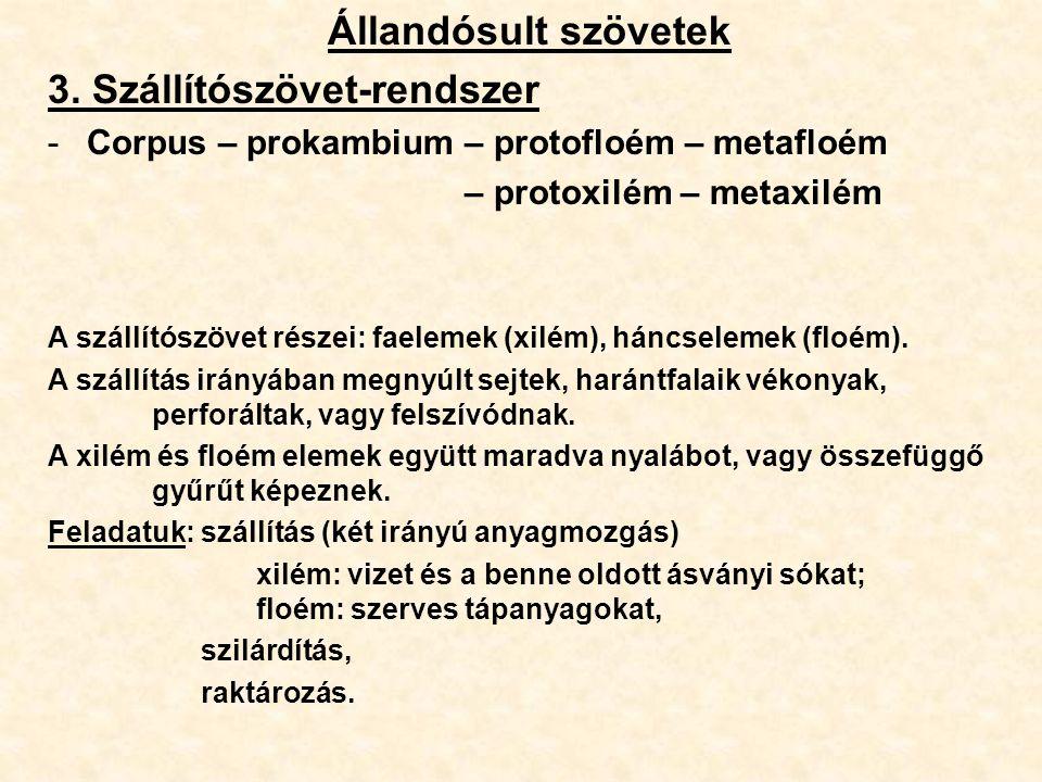 3. Szállítószövet-rendszer