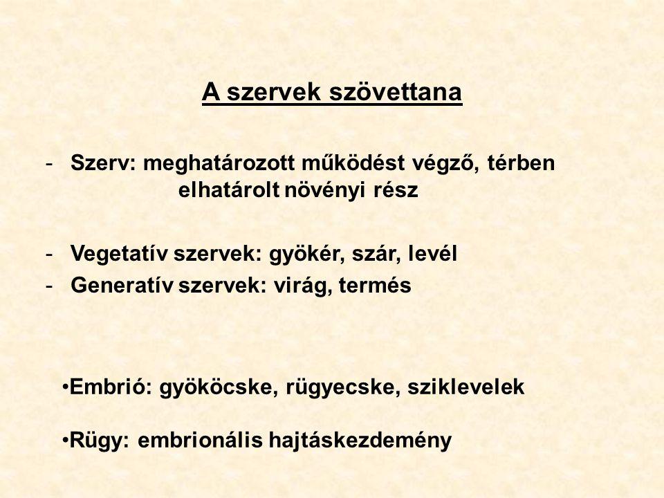 A szervek szövettana Szerv: meghatározott működést végző, térben elhatárolt növényi rész. Vegetatív szervek: gyökér, szár, levél.