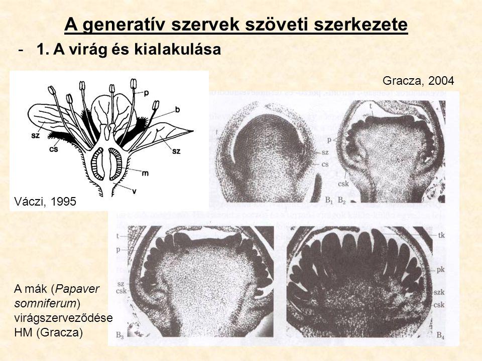 A generatív szervek szöveti szerkezete