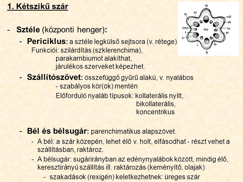 Sztéle (központi henger):