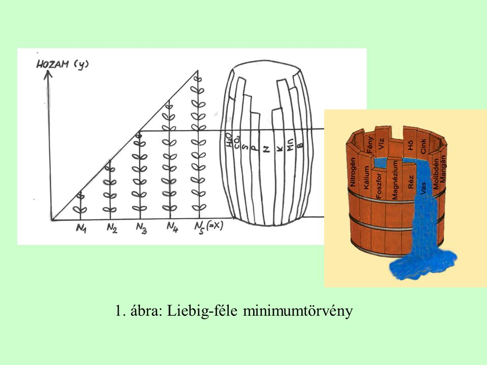 1. ábra: Liebig-féle minimumtörvény