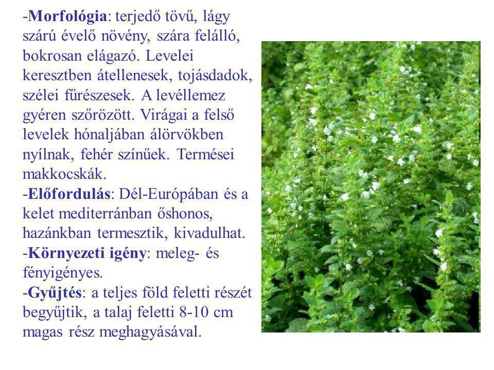 -Morfológia: terjedő tövű, lágy szárú évelő növény, szára felálló, bokrosan elágazó. Levelei keresztben átellenesek, tojásdadok, szélei fűrészesek. A levéllemez gyéren szőrözött. Virágai a felső levelek hónaljában álörvökben nyílnak, fehér színűek. Termései makkocskák.
