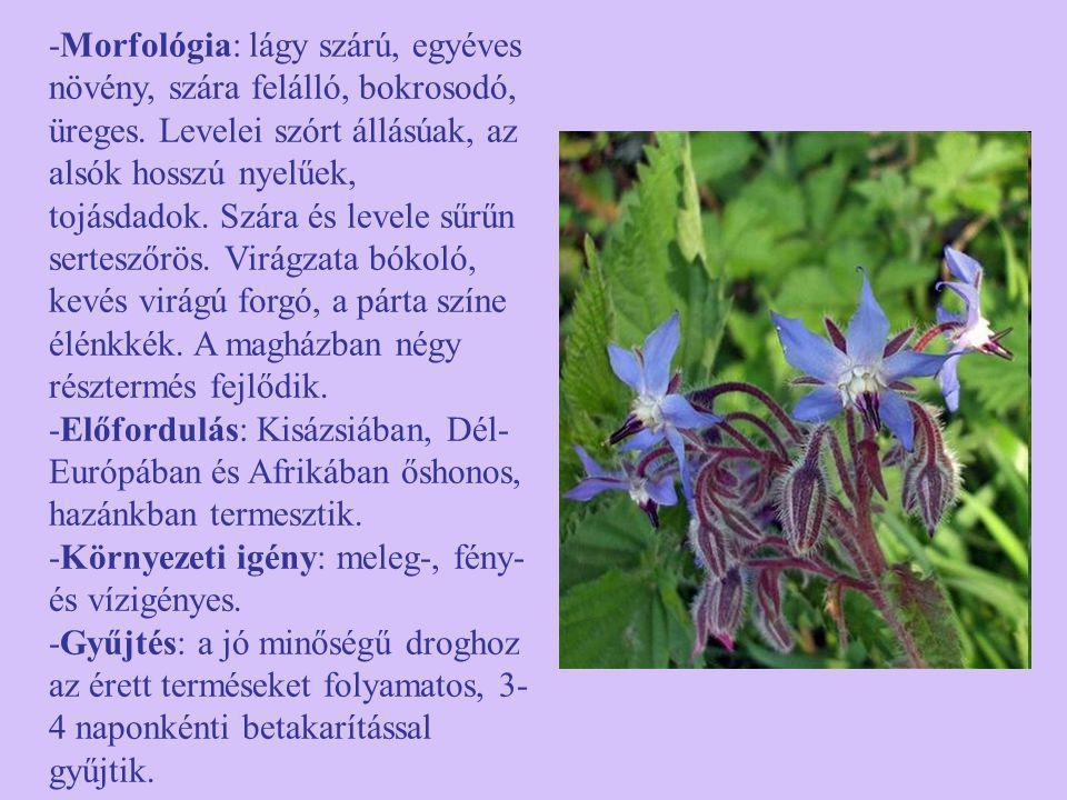 -Morfológia: lágy szárú, egyéves növény, szára felálló, bokrosodó, üreges. Levelei szórt állásúak, az alsók hosszú nyelűek, tojásdadok. Szára és levele sűrűn serteszőrös. Virágzata bókoló, kevés virágú forgó, a párta színe élénkkék. A magházban négy résztermés fejlődik.