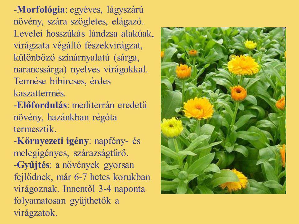 -Morfológia: egyéves, lágyszárú növény, szára szögletes, elágazó