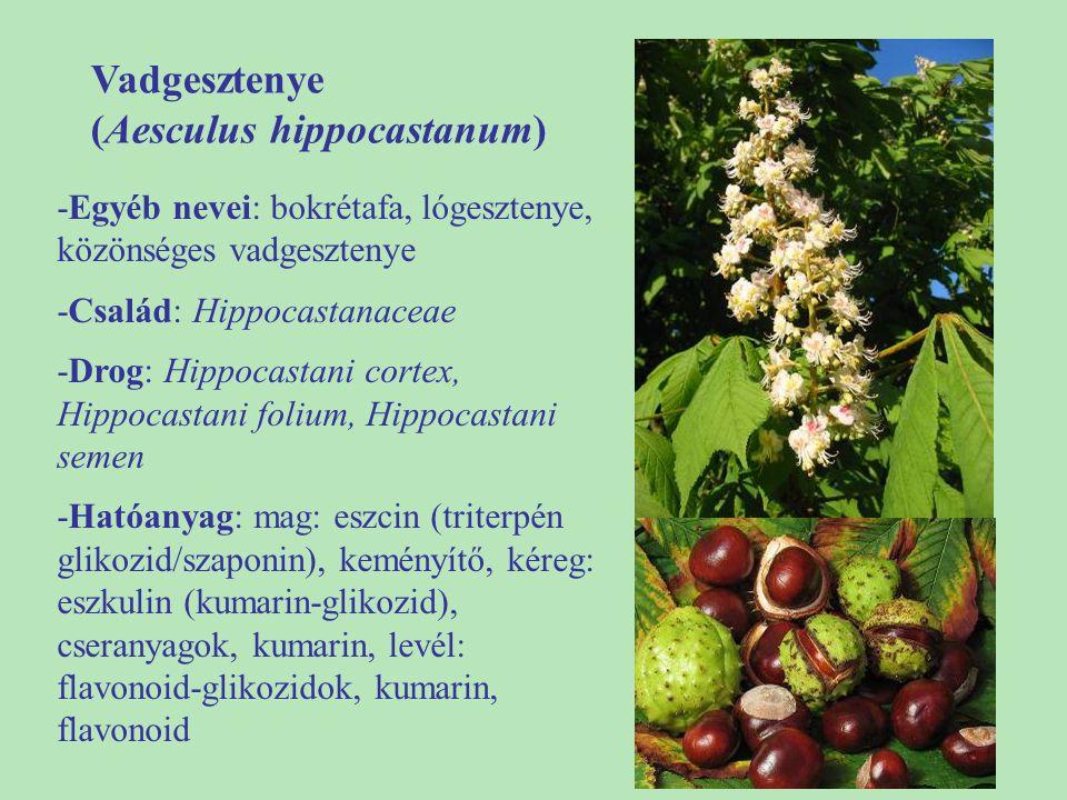 (Aesculus hippocastanum)