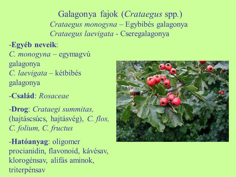 Galagonya fajok (Crataegus spp.)