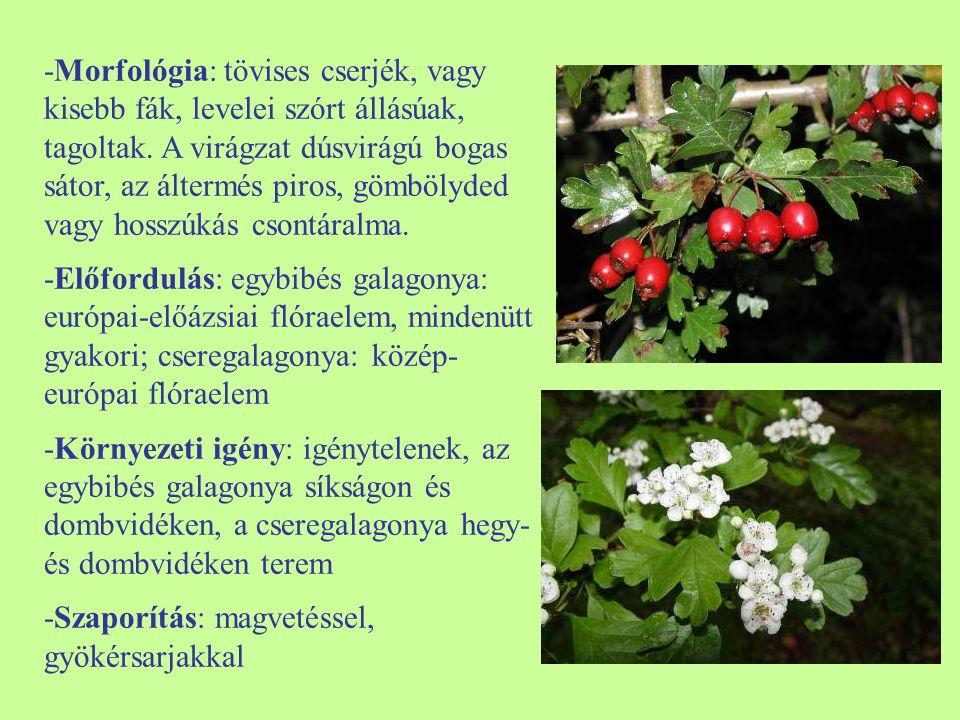 -Morfológia: tövises cserjék, vagy kisebb fák, levelei szórt állásúak, tagoltak. A virágzat dúsvirágú bogas sátor, az áltermés piros, gömbölyded vagy hosszúkás csontáralma.