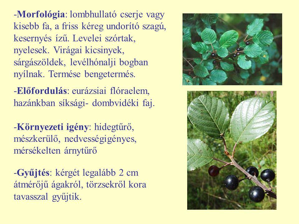 -Morfológia: lombhullató cserje vagy kisebb fa, a friss kéreg undorító szagú, kesernyés ízű. Levelei szórtak, nyelesek. Virágai kicsinyek, sárgászöldek, levélhónalji bogban nyílnak. Termése bengetermés.
