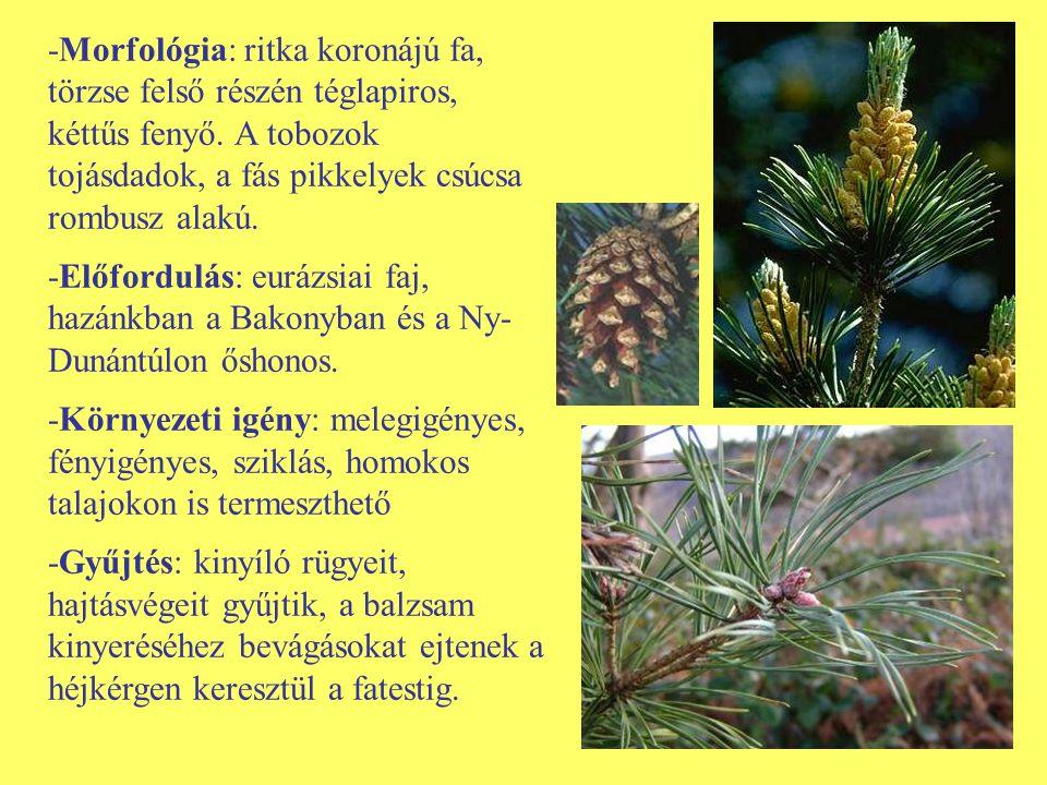 -Morfológia: ritka koronájú fa, törzse felső részén téglapiros, kéttűs fenyő. A tobozok tojásdadok, a fás pikkelyek csúcsa rombusz alakú.