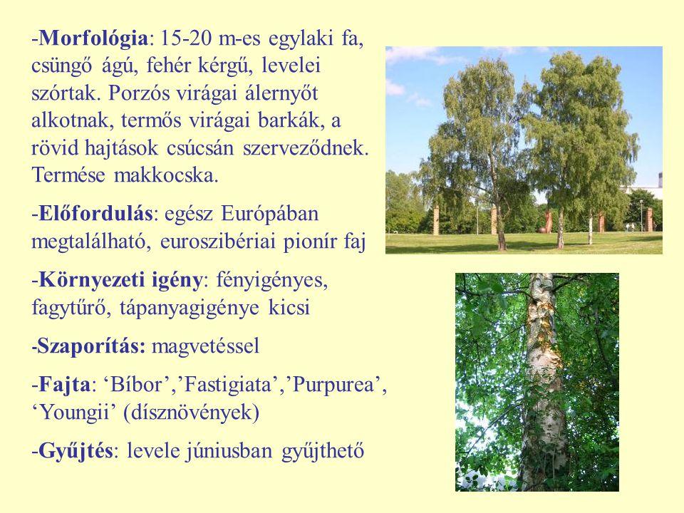 -Előfordulás: egész Európában megtalálható, euroszibériai pionír faj