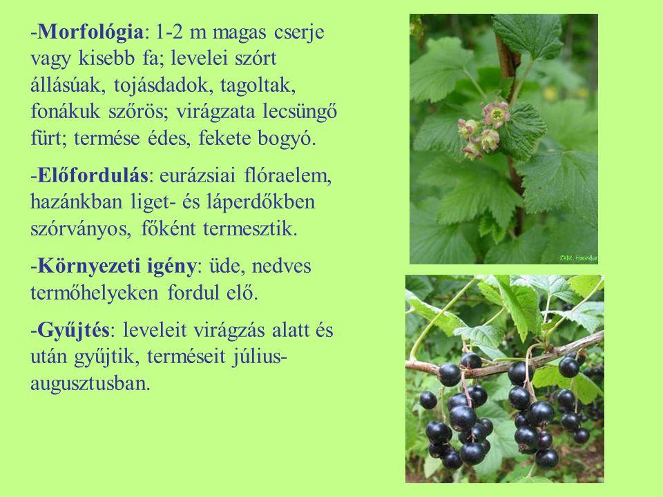 -Morfológia: 1-2 m magas cserje vagy kisebb fa; levelei szórt állásúak, tojásdadok, tagoltak, fonákuk szőrös; virágzata lecsüngő fürt; termése édes, fekete bogyó.