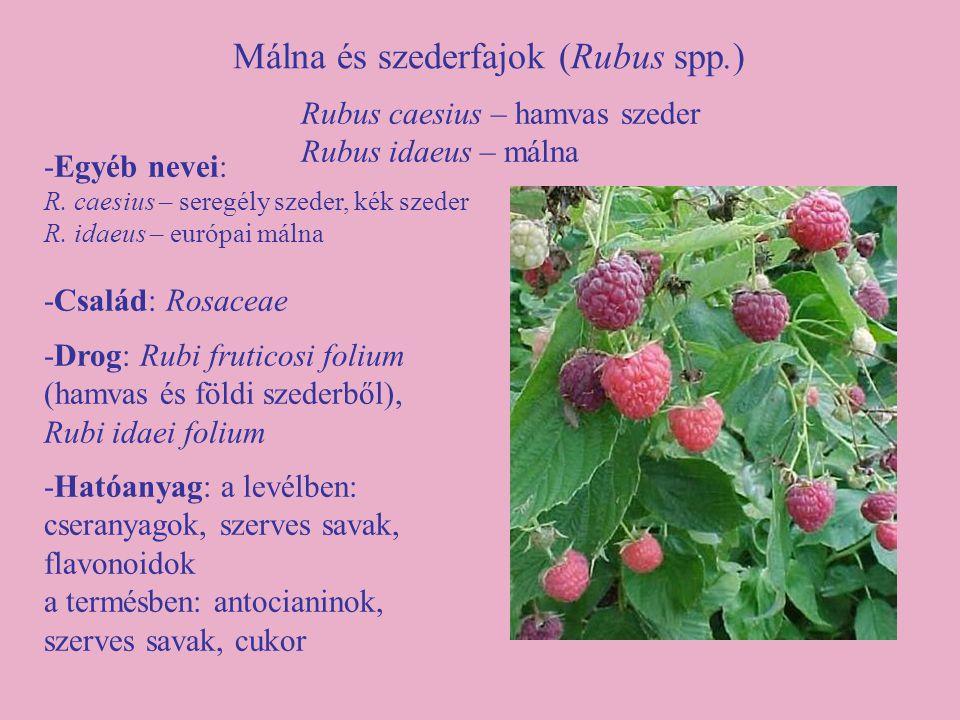 Málna és szederfajok (Rubus spp.)