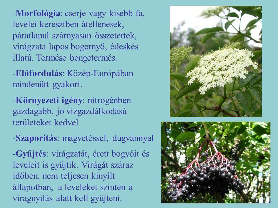 -Morfológia: cserje vagy kisebb fa, levelei keresztben átellenesek, páratlanul szárnyasan összetettek, virágzata lapos bogernyő, édeskés illatú. Termése bengetermés.