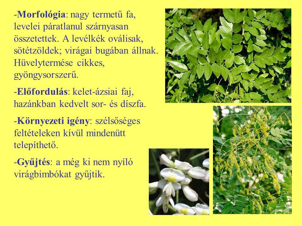 -Morfológia: nagy termetű fa, levelei páratlanul szárnyasan összetettek. A levélkék oválisak, sötétzöldek; virágai bugában állnak. Hüvelytermése cikkes, gyöngysorszerű.