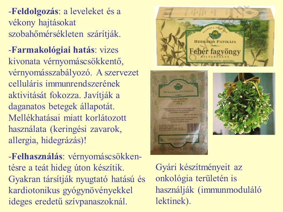 -Feldolgozás: a leveleket és a vékony hajtásokat szobahőmérsékleten szárítják.