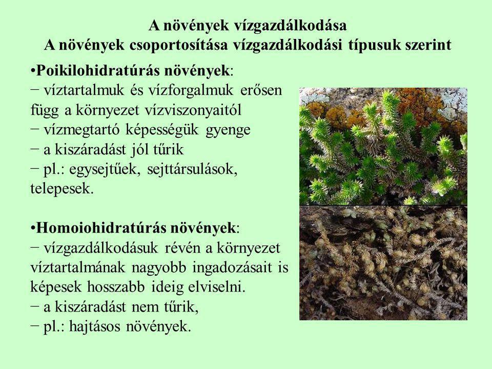 A növények vízgazdálkodása